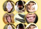 Sorriso animal! De que bicho � essa boca?